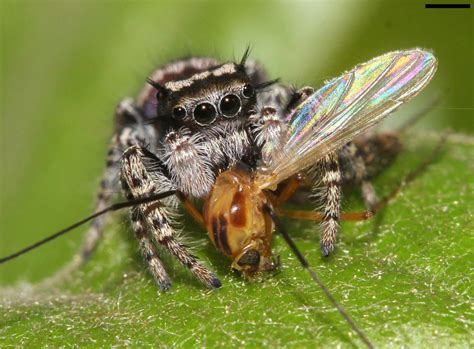 Spiders Eat 400800 Million Tons Of Prey Every Year