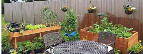 container vegetable garden how to grow vegetables in containersgreenside up