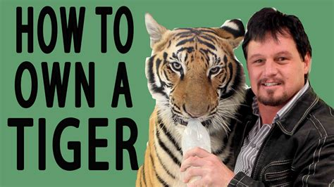 Where To Buy A by How To Own A Tiger Epic How To