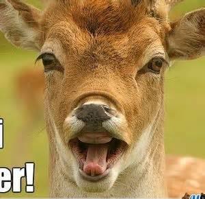 Oh Deer Meme - oh deer by suitonx meme center