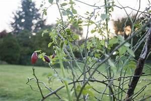 Garten Im Oktober : garten im oktober was vor dem jahresende noch ansteht ~ Lizthompson.info Haus und Dekorationen