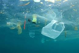 Plastic chemicals changing marine animals' behavior…