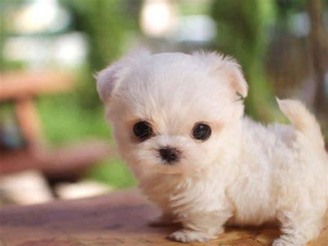 imagenes de perritos bebes muy bonitos  tiernos de todas