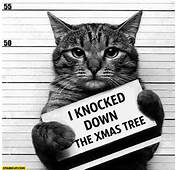 Cat Guilty I Knocked Down The Xmas Tree Prison Jail Arrest