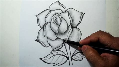 draw  rose easy pencil drawing youtube
