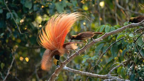 bird  paradise wallpaper  images