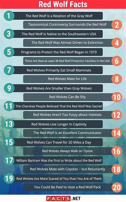 Wolf Facts Infographics Behavior