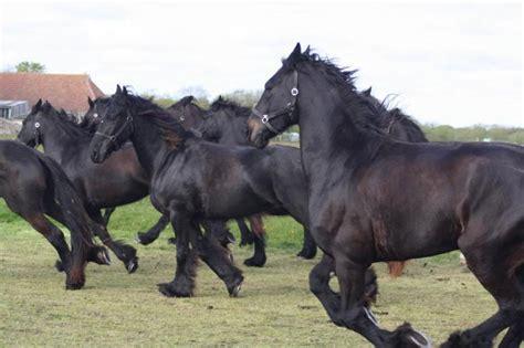 Te Koop Yde by Paarden Te Koop Puur Terschelling