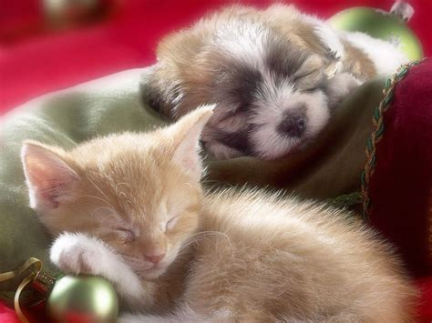 puppies and kittens quotes quotesgram