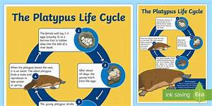 13 Top Kangaroo Life Cycle Teaching Resources