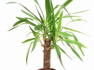 Palme Umtopfen Wurzeln Abschneiden : garten palme schneiden ~ Frokenaadalensverden.com Haus und Dekorationen
