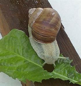 Was Fressen Schnecken : wir schauen einer schnecke beim fressen zu versuchserkl rung medienwerkstatt wissen 2006 ~ Orissabook.com Haus und Dekorationen