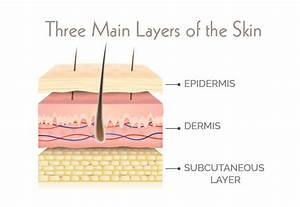All About Skin Thickness Explained