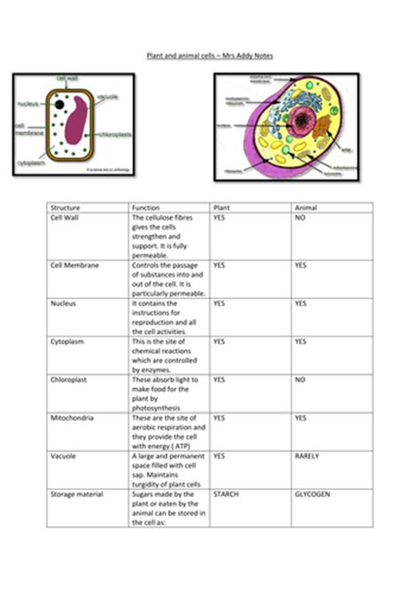 plant  animal cells revision notes  butterflybeauty