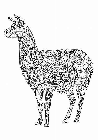 Llama Coloring Lama Paisley Zentangle Lamas Patterns