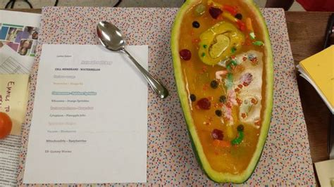 animal cell modelwatermelon rind jello fruit