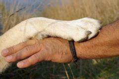 bien pr 233 parer chien pour l ouverture de la chasse