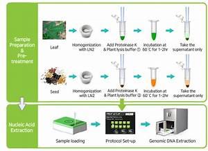 Exiprep U2122 Plus Plant Genomic Dna Kit  96 Reactions