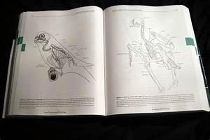 Cornell Lab Of Ornithology Handbook Of Bird Biology