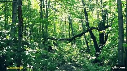 Forest Relaxing Walking Hour Sounds Gifs Animated