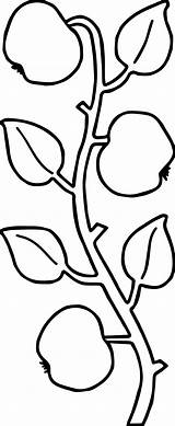 Coloring Ivy Apple Tree Wecoloringpage sketch template