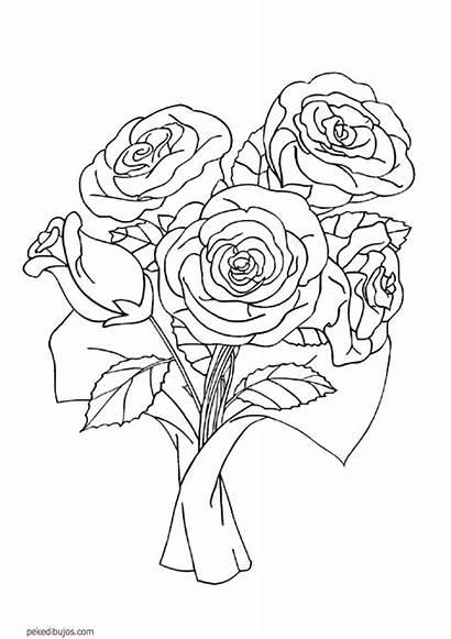 Dibujos Coloring Colorear Rose Roses Flores Colorier