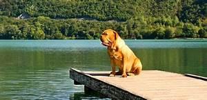 Urlaub Mit Hund Am Meer Italien : der fti hundeurlaub urlaub mit hund ~ Kayakingforconservation.com Haus und Dekorationen
