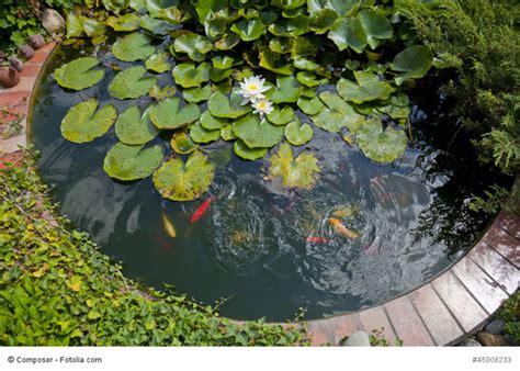 Teichpflanzen Fuer Verschiedene Wasserzonen by Teichpflanzen