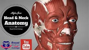 Head And Neck Muscle Anatomy