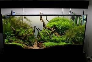 Aquarium Deko Ideen : deko fur aquarium selber machen ~ Lizthompson.info Haus und Dekorationen