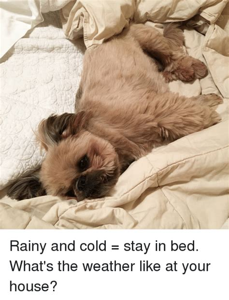 Stay In Bed Meme - funny rainy memes of 2017 on sizzle getting lost