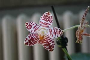 Orchideen Oase Berlin : die liebe zu den pflanzen ist grenzenlos interview mit ~ A.2002-acura-tl-radio.info Haus und Dekorationen