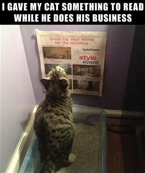 New Cat Memes - funny pictures today 10 pics cats on friday and funny