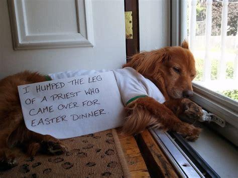 dog shaming dont poke  bear