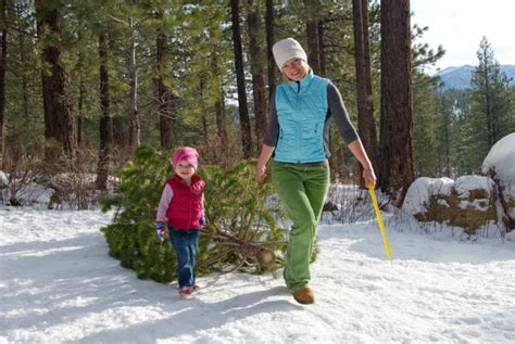 7 things to know when cutting your national forest