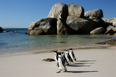 Places To Visit And Things To Do In Cape Town South Africa