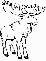 Coloring Pages Moose Printable Craft Animals Related Posts Adults sketch template