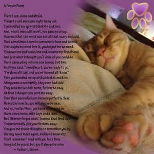 the rainbow bridge poem for cats foster poem the reason for imagine home