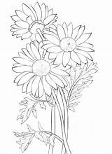 Coloring Daisy Flower Worksheets K5 July sketch template