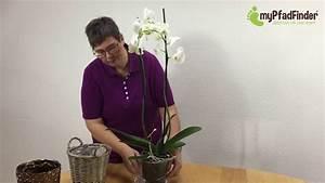 Künstliche Orchideen Im Topf : orchideen im topf oder korb arrangieren youtube ~ Watch28wear.com Haus und Dekorationen