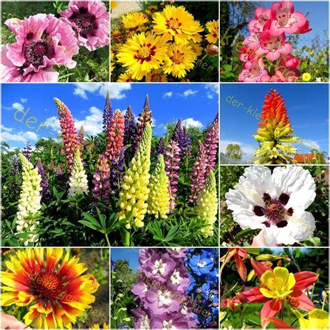 Sommerblumen Mehrjährig Winterhart by Herbststauden Winterhart Pflanzen F 252 R Nassen Boden
