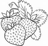 Coloring Strawberry Pages Fruits Print Vegetables sketch template