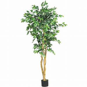 5 foot Ficus Tree: Potted 5208