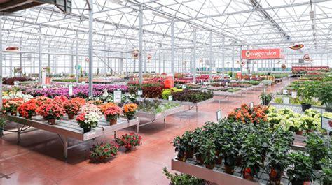 garden fiori e piante fiori e piante zocca garden