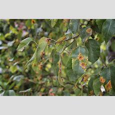List Of Common Plant Diseases