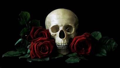 Skull Rose Wallpapers Roses Iphone Background Dark