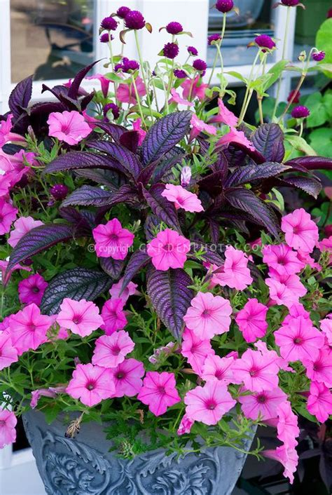 types of annual plants 867 best images about flowers gardens containers perennials annuals on pinterest