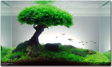 freshwater aquascape bonsai aquarium  takashi amano