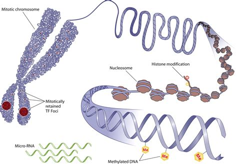 Modification To Dna by We Can All Re Write Our Genetic Blue Print With