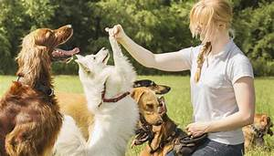interview why pet owners should hire dog sitters With dog babysitter